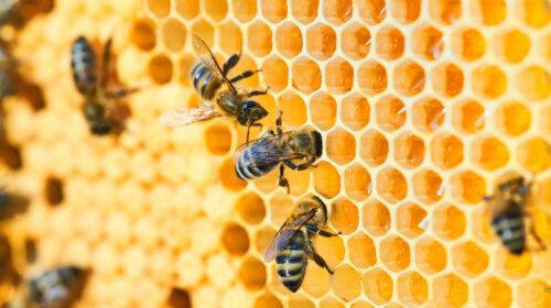 Internacional – Alto a la exportación de pesticidas que matan a las abejas